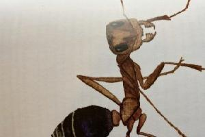 https://safirsoft.com We're living on a planet of ants