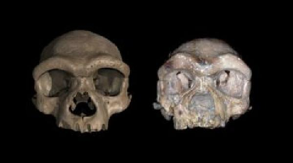 https://safirsoft.com Is the 'Dragon Man' skull actually a new species of human?