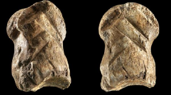 https://safirsoft.com Neanderthals were carved into a bone 51,000 years ago