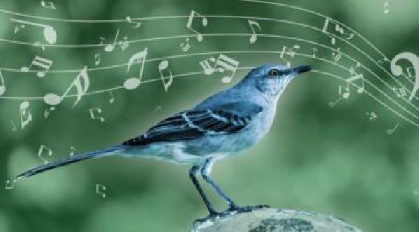 https://safirsoft.com The Amazing Relationship Between Silly Bird Song and Kendrick Lamar