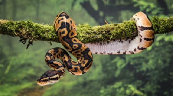 https://safirsoft.com How did mass extinction lead to snakes?